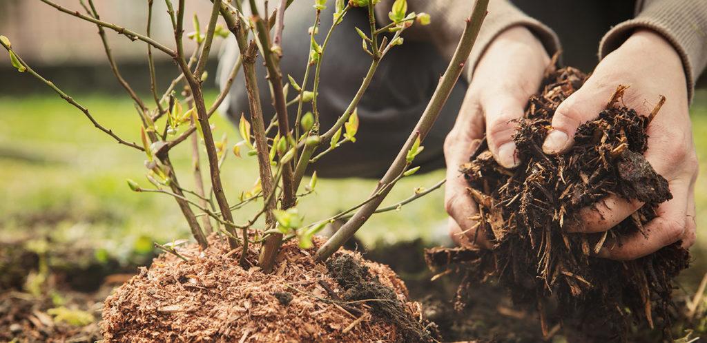 Reportage sur le projet de plantations d'arbres avec les magasins U de Vendée