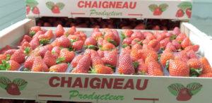Chaigneau fraises en Vendée