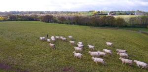 Boeuf fermier de Vendée IGP